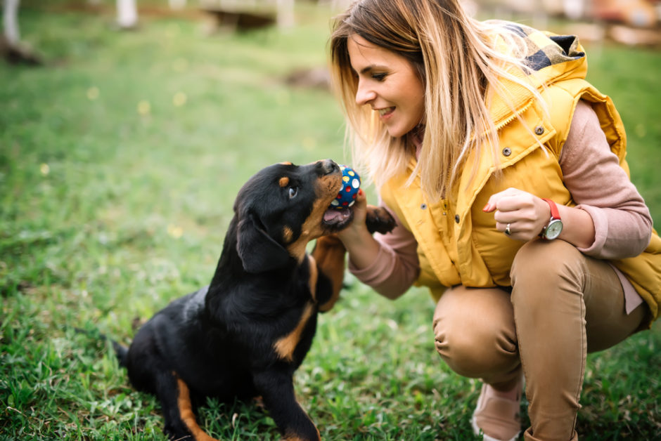 The Easiest Dog Breeds to Train